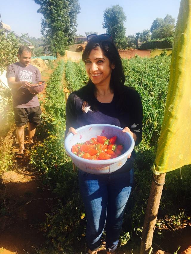 Strawberry Mahableshwar