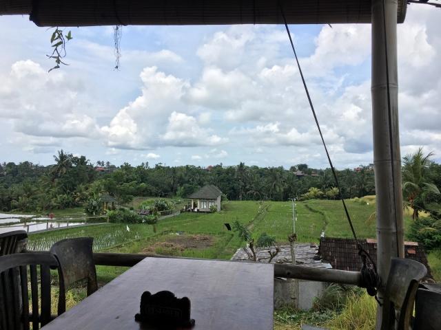Rice Field Bali 1