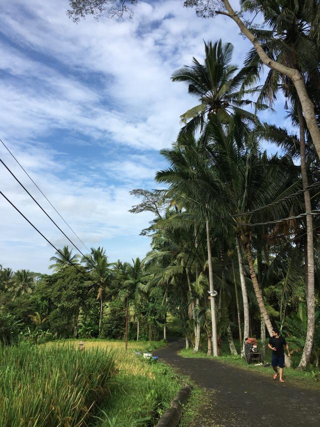 Rice_field_bali